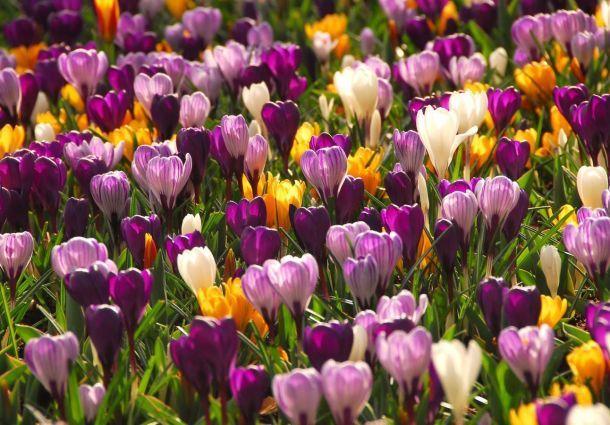 Gemeinsame Gartengestaltung: Farbe im Frühling - bauemotion.de @QR_51