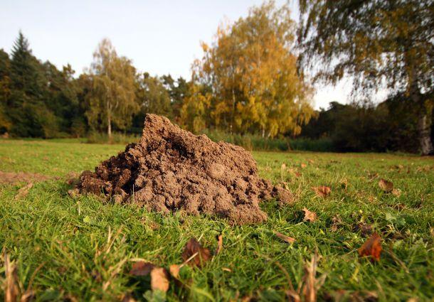 Berühmt 20 Wege, einen Maulwurf aus dem Garten zu vertreiben - bauemotion.de OB76