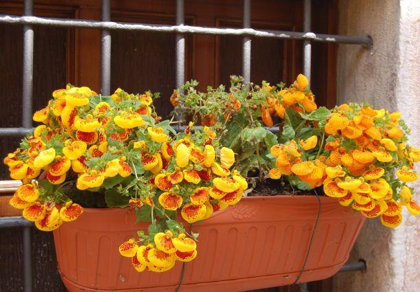 Blumen Fur Den Balkon Im Schatten Bluhen Im Dunkeln Bauemotion De