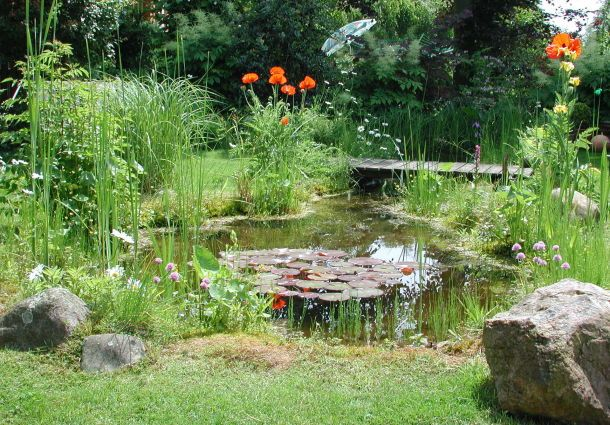 Pflanzen Fur Ihren Gartenteich Bauemotion De