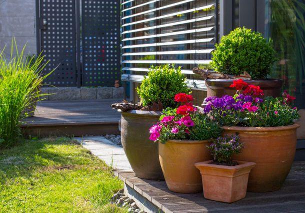 k belpflanzen f r balkon und terrasse. Black Bedroom Furniture Sets. Home Design Ideas