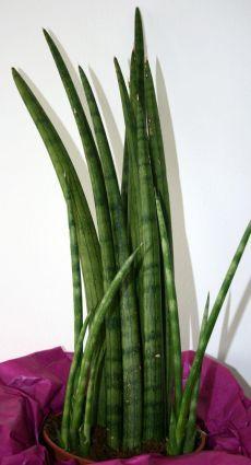 Pflanzen Fur Badezimmer Geeignet - Drewkasunic Designs