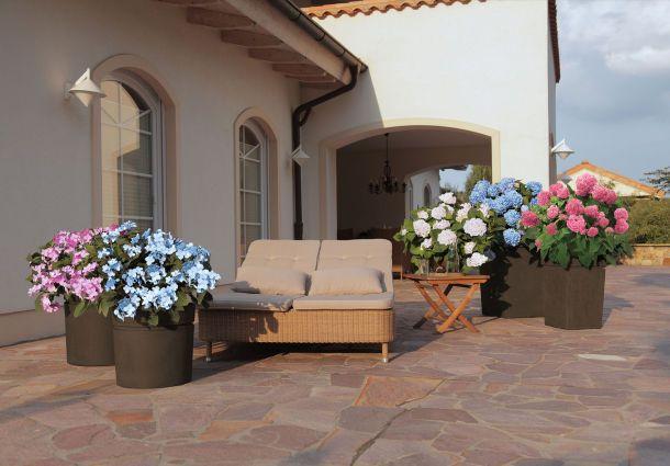 terrassengestaltung so machen k belpflanzen freude. Black Bedroom Furniture Sets. Home Design Ideas