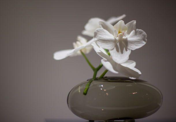 Pflanzen Für Das Badezimmer