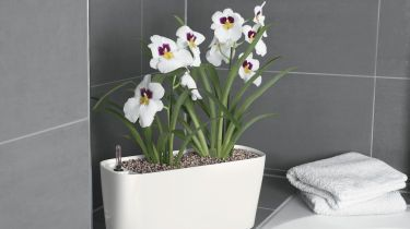 Pflanzen Fur Das Badezimmer Bauemotion De