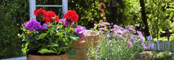 Kleine Garten Richtig Gestalten Und Bepflanzen Bauemotion De