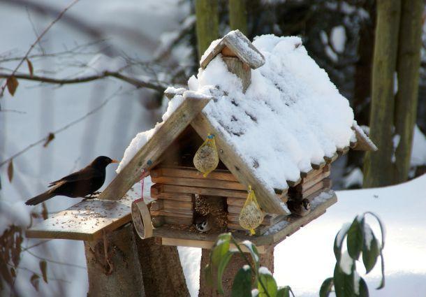 Futterhaus Für Wildvögel Im Winter