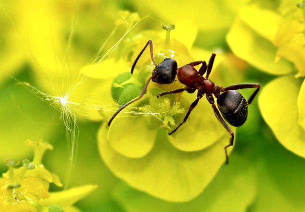 Prächtig Ameisen im Garten: Was gegen ungebetene Krabbler hilft - bauemotion.de @BK_18