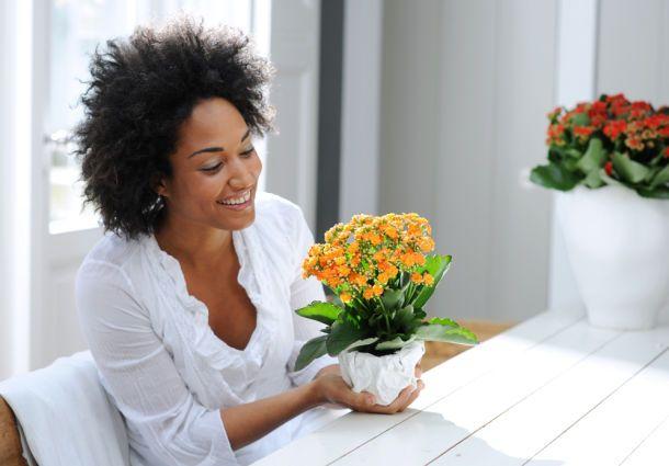 Robuste zimmerpflanzen f r vergessliche - Robuste zimmerpflanze ...
