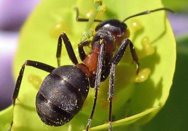 Ameisen im Haus: So werden Sie die Krabbeltiere wieder los ...