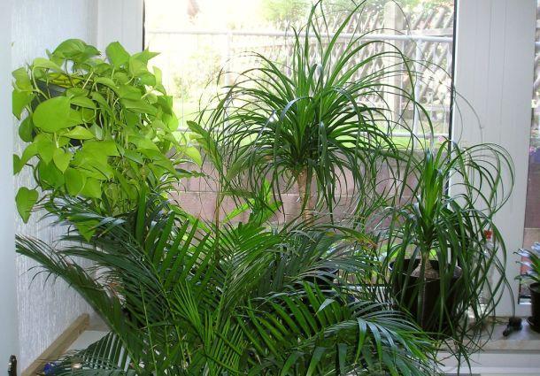 Kübelpflanzen überwintern: So bleiben Palme, Fuchsie und Co. gesund ...