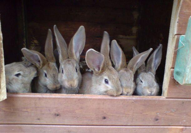 Hasen oder Kaninchen bevorzugen einen windgeschützten und schattigen ...