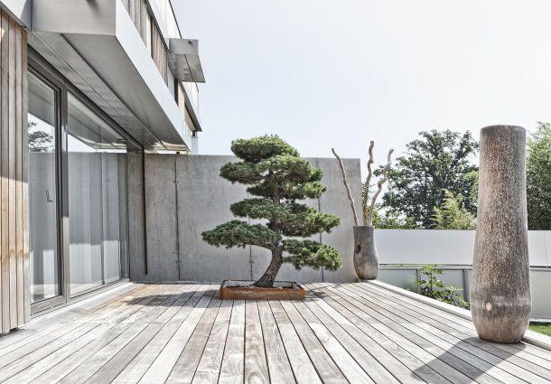 bonsai im garten ein hauch von fernost. Black Bedroom Furniture Sets. Home Design Ideas