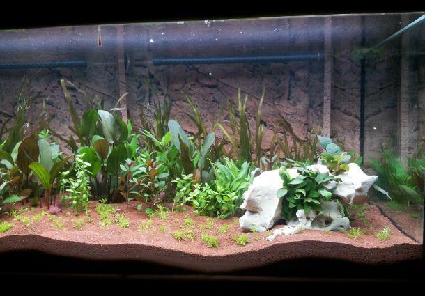 ein terrarium selbst bauen so bekommen exoten ein sch nes zuhause. Black Bedroom Furniture Sets. Home Design Ideas